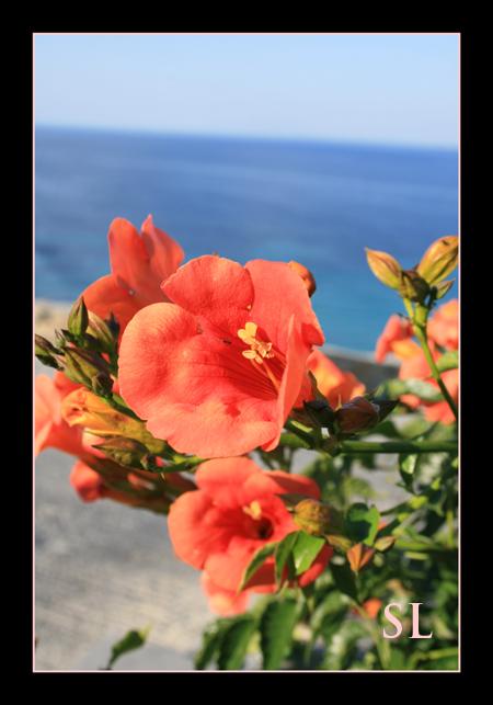 Orange Flowers on Mykonos